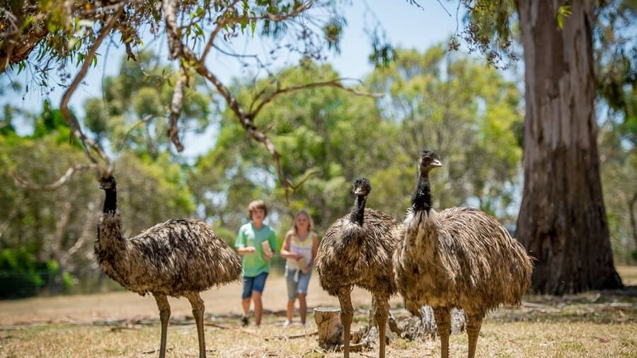 How to spend a weekend in Adelaide with the kids