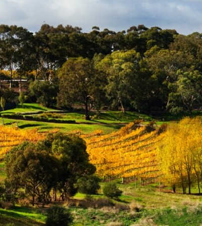 Half-day McLaren Vale Wine Experience $69