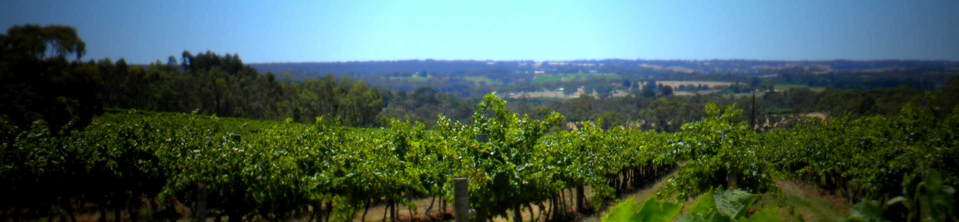 How many wineries are in McLaren Vale?